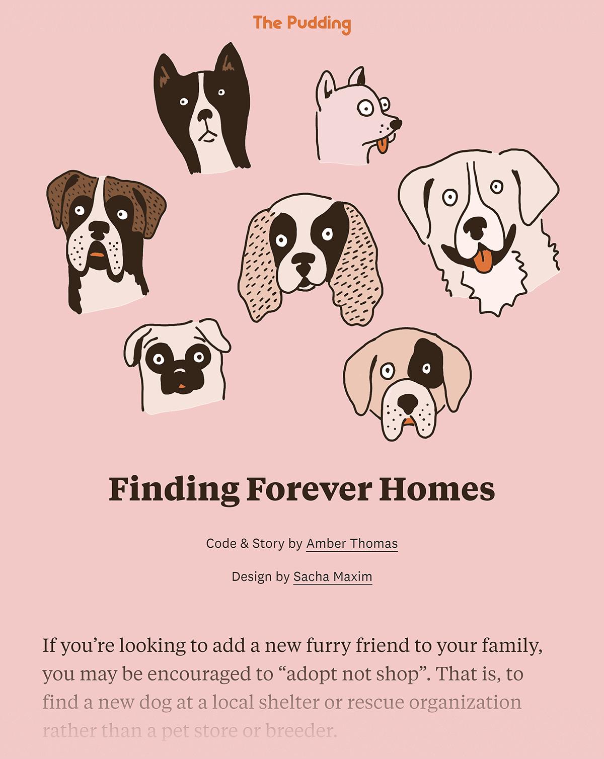 Pudding dog shelter report
