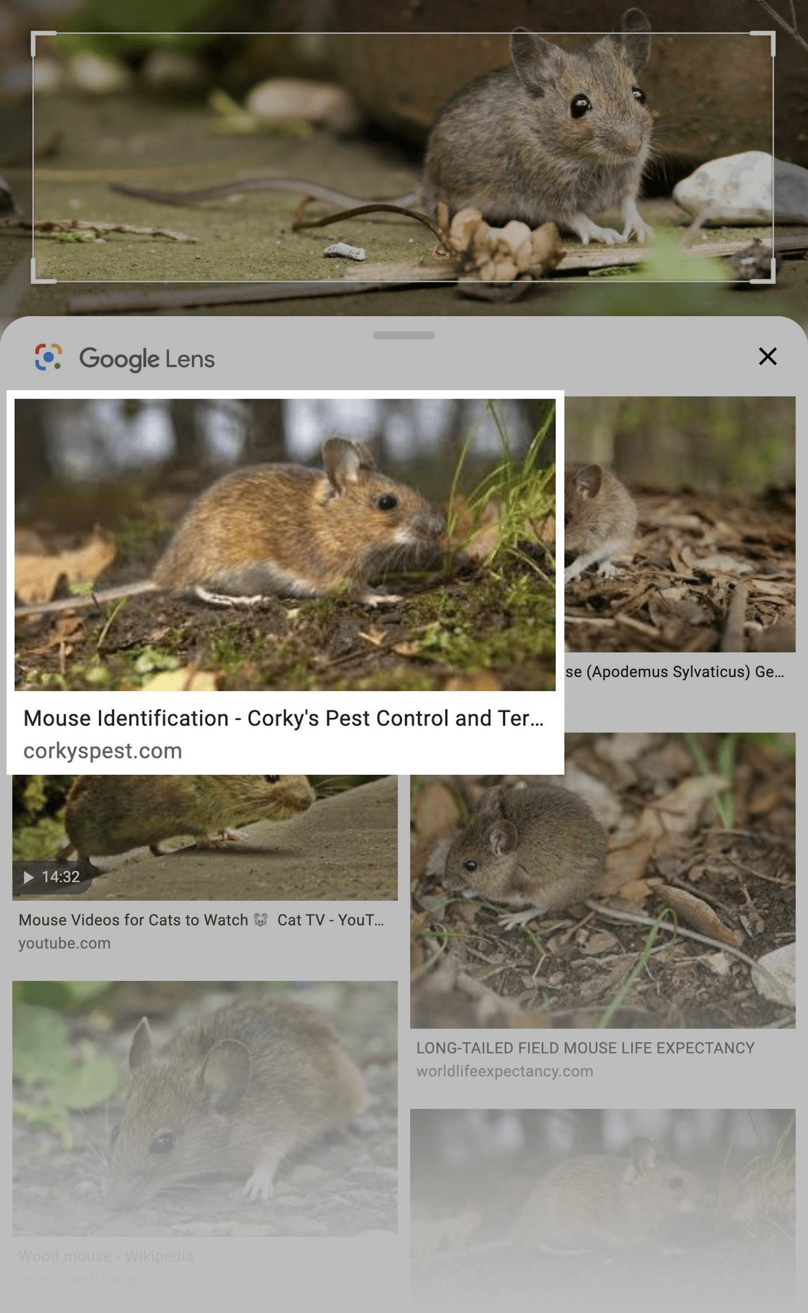Google Lens – Mouse Search