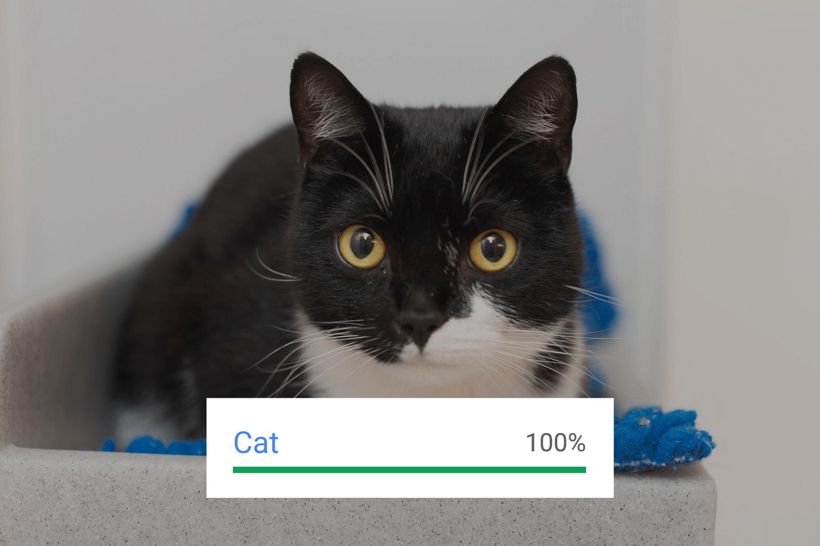 Google Vision API – Cat Result